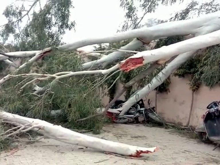 रोड चोड़ा करने के लिए काटा जा रहा पेड़ गिरा, 8 बाइक और 1 कार क्षतिग्रस्त